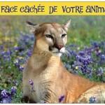 Chats, chiens et chevaux, voulez-vous connaître la face cachée de votre animal familier?