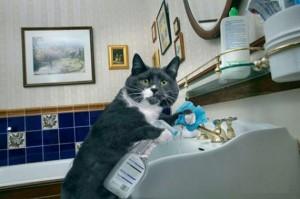 chat guérison et ho'oponopono12