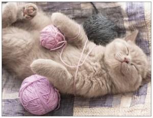 chat guérison et ho'oponopono4