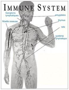 renforcer système immunitaire dien chan3