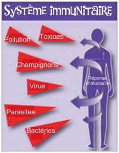 renforcer système immunitaire dien chan4