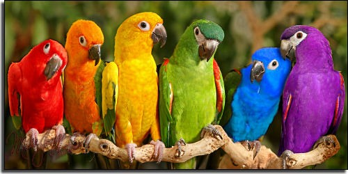 Consultations forme sante ideale - Langage des couleurs ...