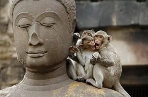 bouddhisme en Thailande18