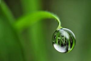 detoxifier organisme  booster metabolisme12