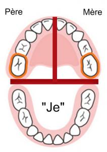décodage dentaire 16